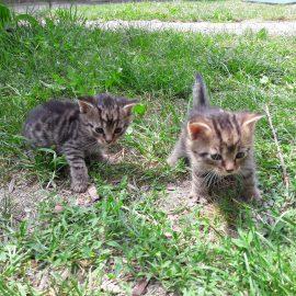 Májová koťátka v červenci k odběru