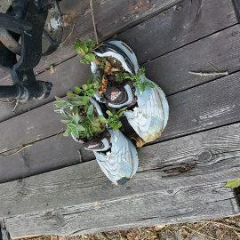Květináče z bot? Originální nápad