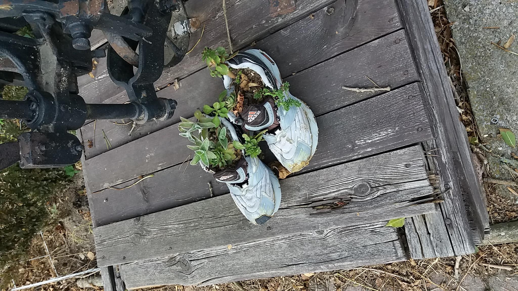 květináče z bot